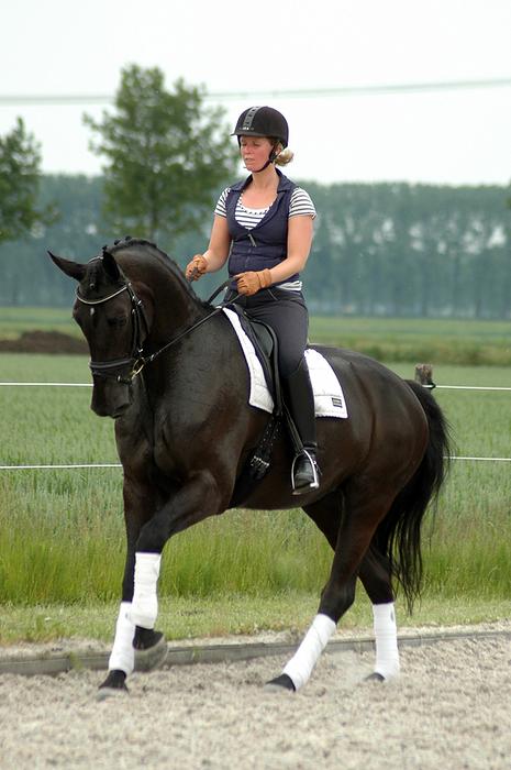 paarden training heemskerk