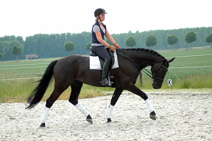 paarden training