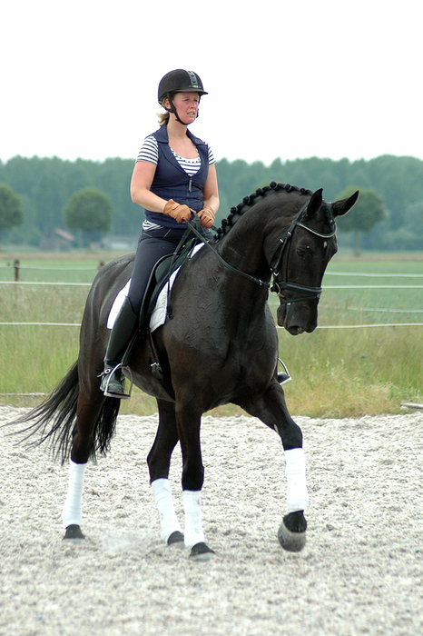 paarden training suzanne