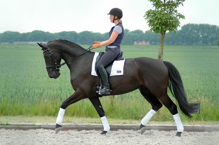 paarden dressuur